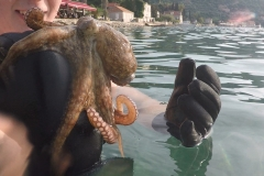 Alex-and-the-octopus